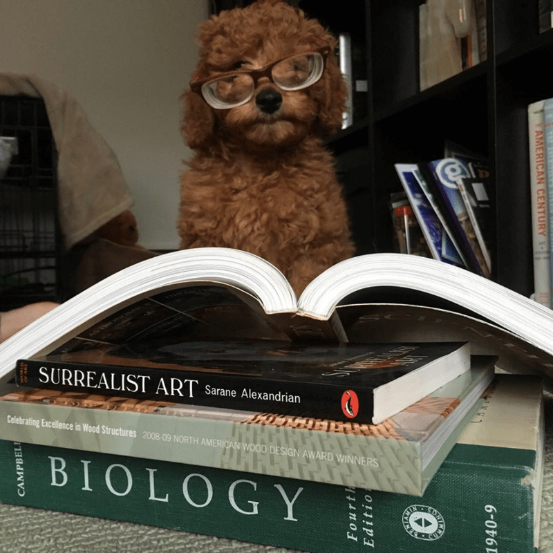a cute list of dogs enjoying books