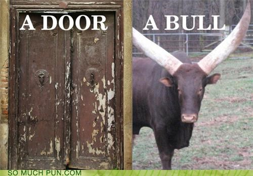 adorable,bull,cute,door,puns