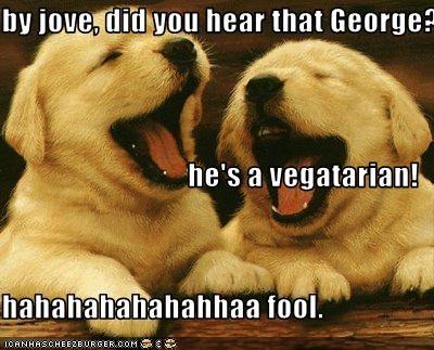 golden retriever laugh puppy vegetarian