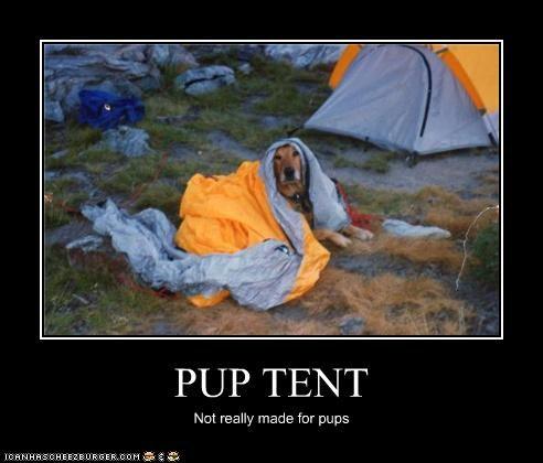 golden retriever outside tent - 3764441600