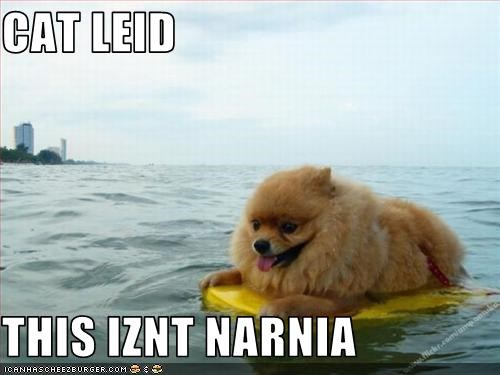 disappointment liar narnia pomeranian water