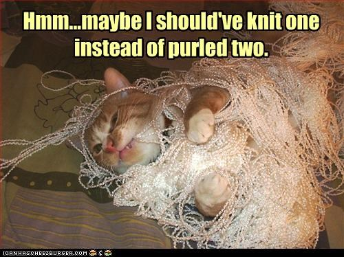 caption captioned cat knit knitting mistake purled purling reconsidering regret tabby tangled yarn