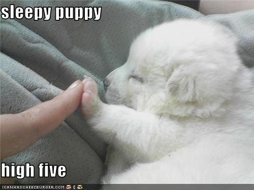 adorable Hall of Fame high five puppy sleepy whatbreed - 3765100032