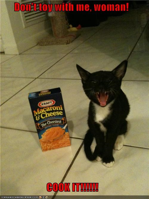 caption,captioned,cat,cook it,dont-toy-with-me,Hall of Fame,kitten,mac n cheese,threat,upset,warning,woman