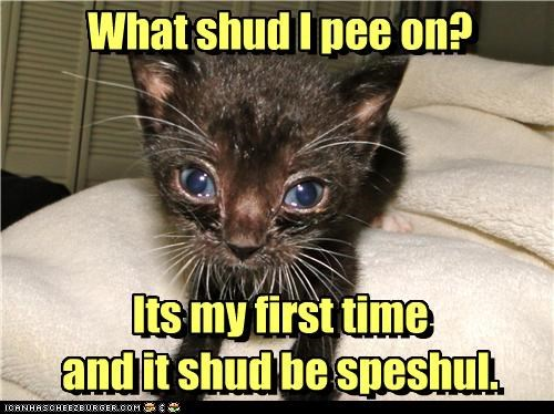 accident caption captioned cat decision dilemma first time kitten peeing question special special occasion - 3765146880