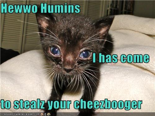 Cheezburger Image 3765178368