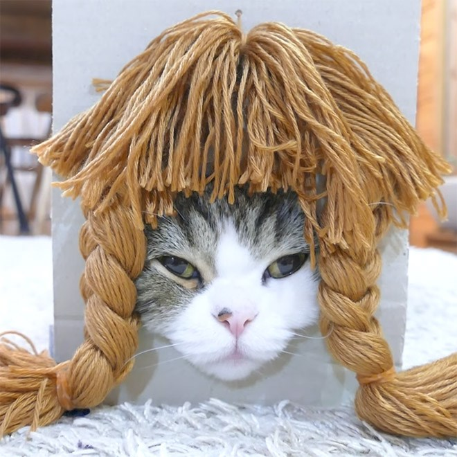 funny photos of a cat wearing a wig