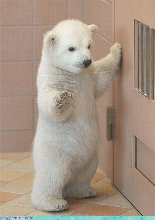 baby cub polar bear - 3765903872