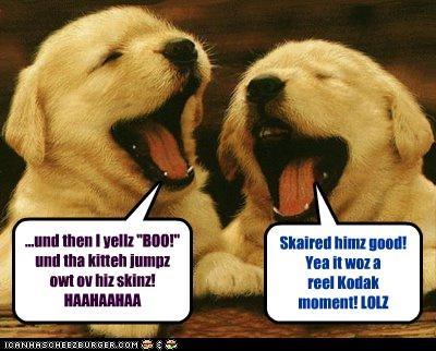 """...und then I yellz """"BOO!"""" und tha kitteh jumpz owt ov hiz skinz! HAAHAAHAA Skaired himz good! Yea it woz a reel Kodak moment! LOLZ"""
