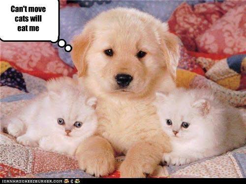 Cheezburger Image 3767707136