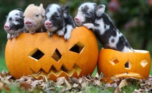 animals pumpkin halloween