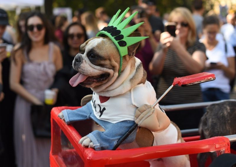 a list of amazing dog costumes from new york parade