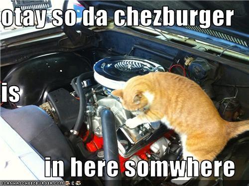 Cheezburger Image 3768647168
