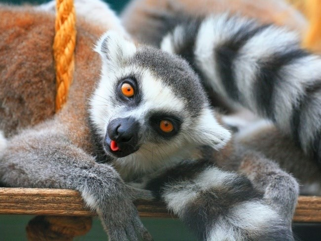 wise wisdom words from lemurs to us