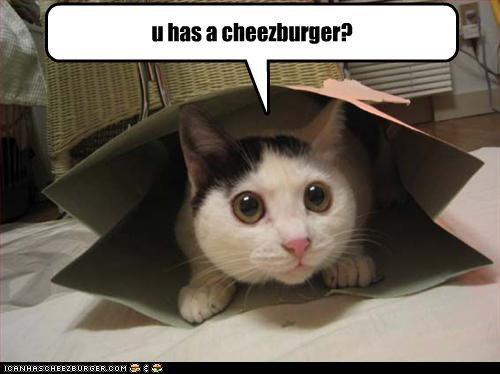 Cheezburger Image 3769236224