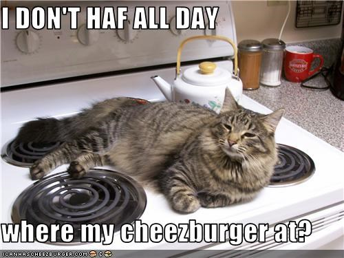 Cheezburger Image 3769948928