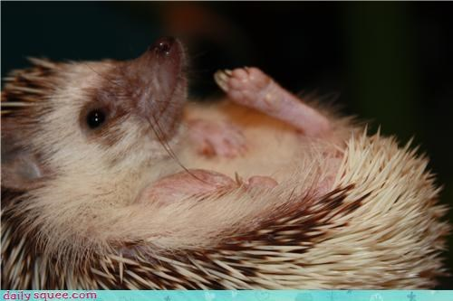 face,hedgehog,smile