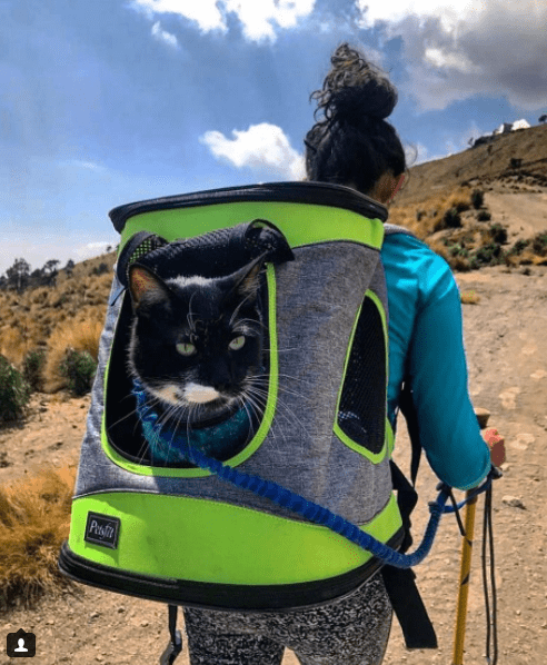 funny photos of camping cats