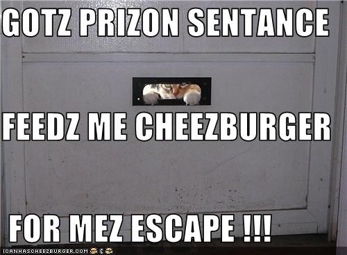 Cheezburger Image 3770710784