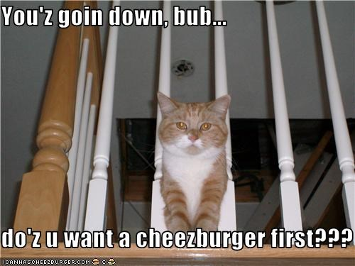 Cheezburger Image 3770837760