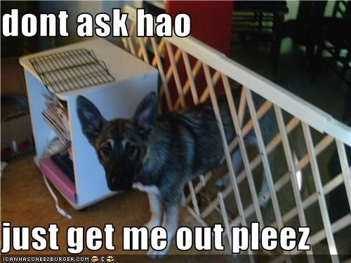 divider,embarassment,german shepherd,ohnoes,puppy,stuck
