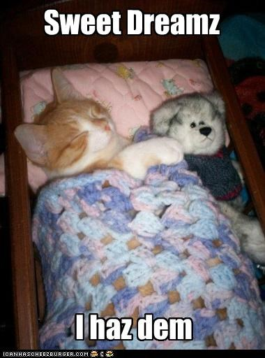 asleep caption captioned cat cuddling dreaming dreams i has kitten sleeping stuffed animal sweet teddy bear - 3770923520