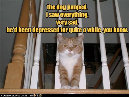 caption,captioned,cat,depressed,depression,dogs,everything,explanation,jumped,lying,Sad,saw,suicide,tabby,very,witness