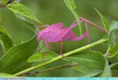 bug camouflage FAIL