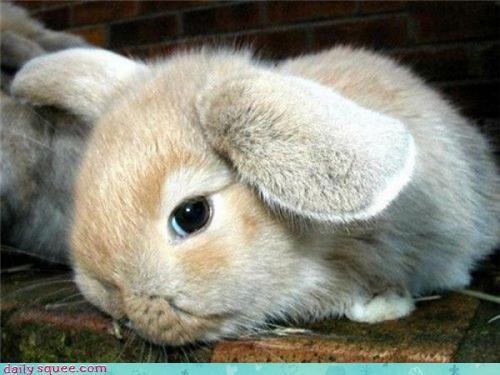 bunny cute face - 3771707392