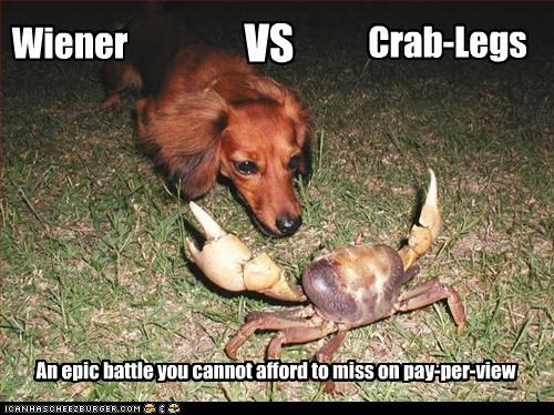 Wiener VS Crab-Legs An epic battle you cannot afford to miss on pay-per-view