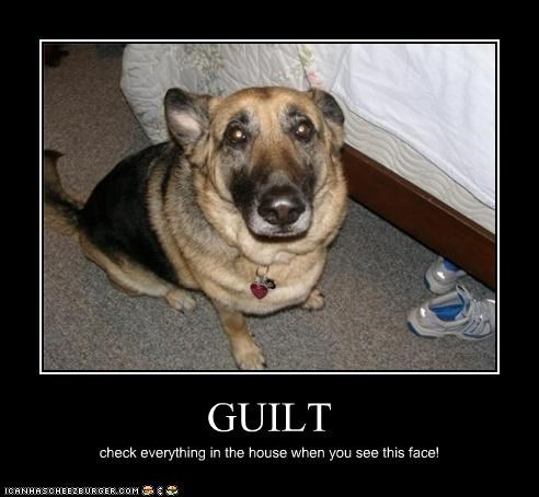 GUILT check everything in the house when you see this face!