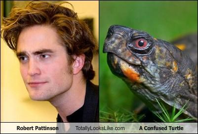 confused turtle,robert pattinson