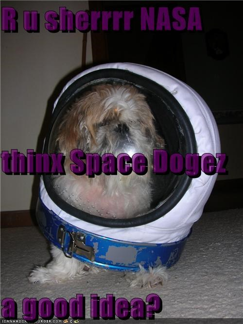 Cheezburger Image 3773936128