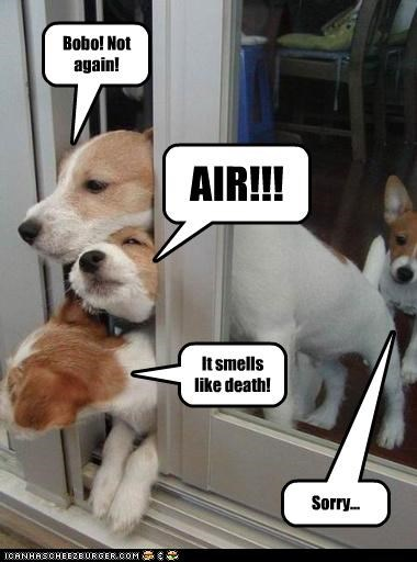 fart,Hall of Fame,jack russel terrier,need air,sorry,whoops