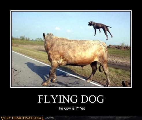 cow dogs funny flying - 3774725888