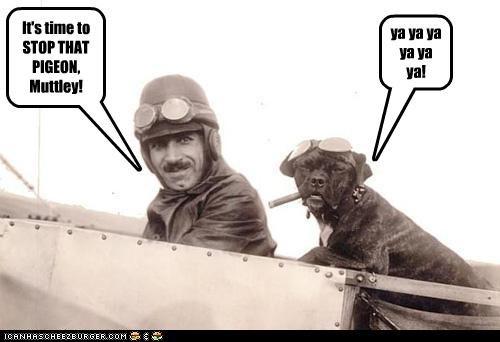 It's time to STOP THAT PIGEON, Muttley! ya ya ya ya ya ya!
