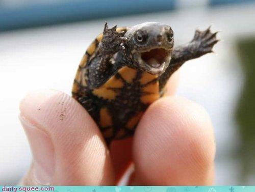 cute face turtle - 3775072000