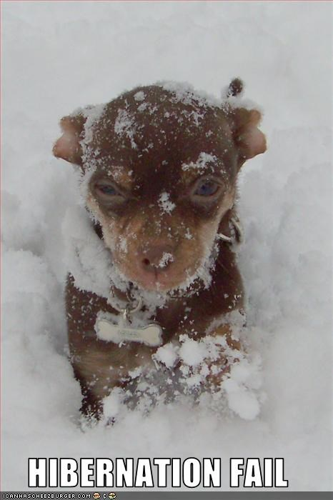 cold,hibernation,puppy,puppy whatbreed,sadness,snow