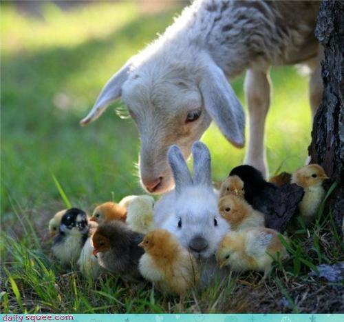 bunny chick goat - 3775547392