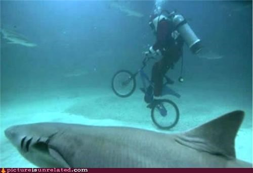 bad idea,bike,race,scuba diver,shark,wtf
