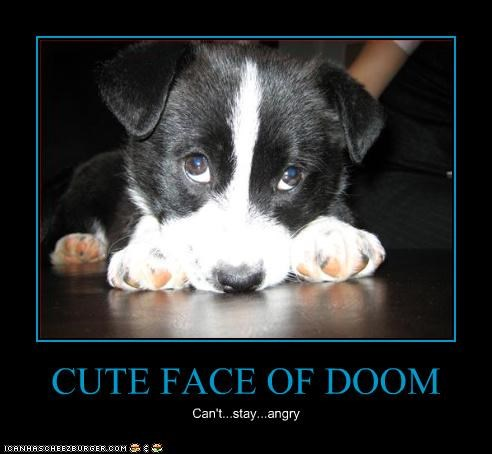 cute doom mixed breed puppy suckup - 3776008192