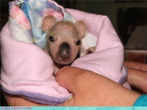 baby boopable koala - 3776956672