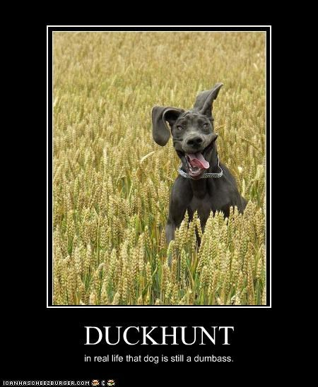 DUCKHUNT in real life that dog is still a dumbass.