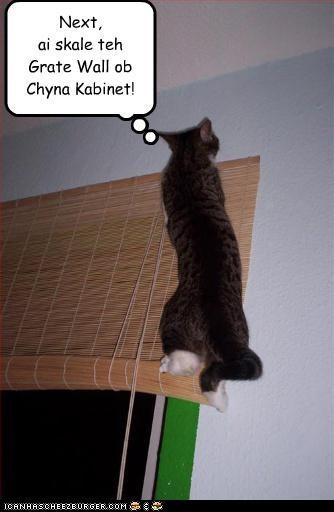 bad cat caption climbing plotting window - 3777893376
