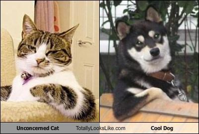 cool dog,unconcerned cat