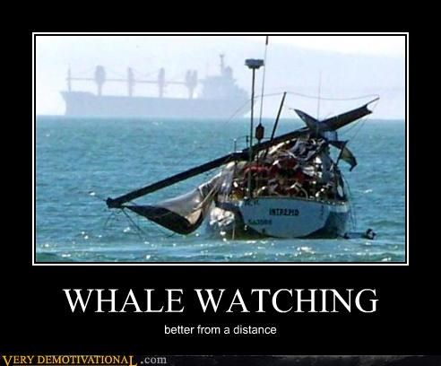 wtf watching boat whales funny - 3778951936