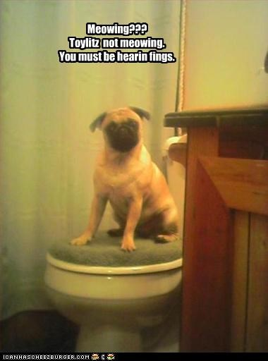 meowing pug sinister toilet - 3778988544