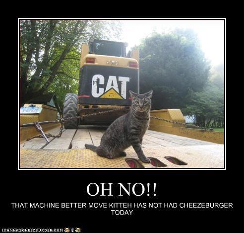 Cheezburger Image 3779055616