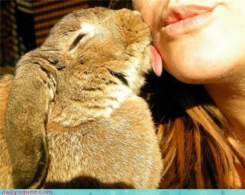 bunny,KISS,lick