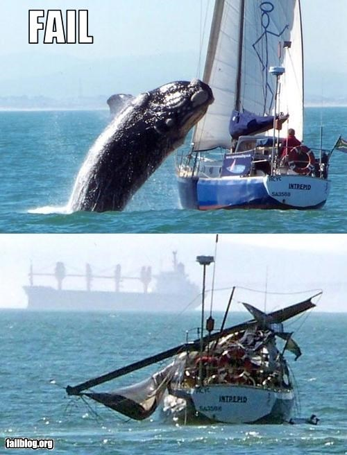 destruction,failboat,whale watching,whales,yachting
